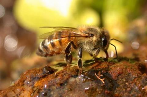 Muerte masiva de abejas en Europa