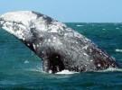 Japón pone fin a la temporada de caza de ballenas en la Antártida