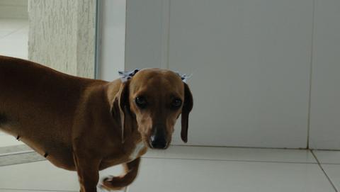 Medicación para las mascotas