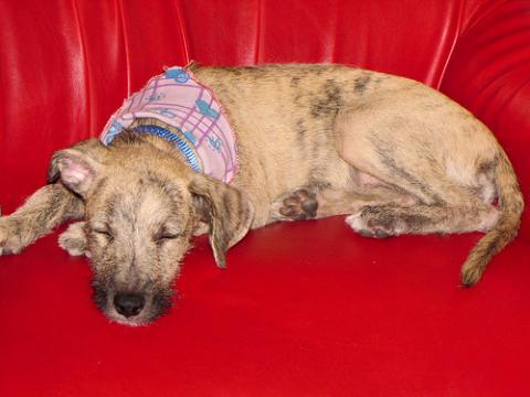 Adopción de mascotas en Madrid