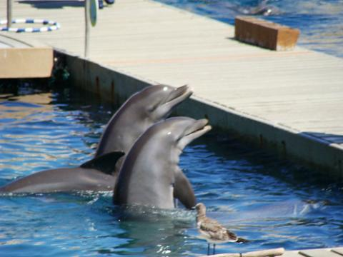 Conducta sexual de los delfines