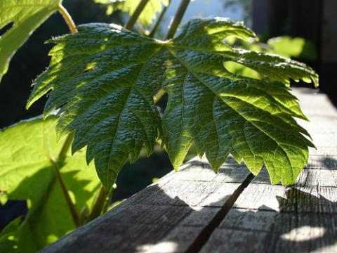 A un paso de la fotosintesis artificial