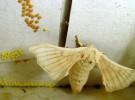 Las mariposas y la nanotecnología