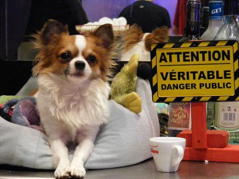 Restaurantes para mascotas
