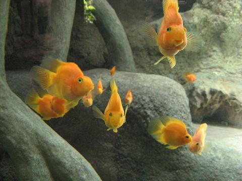 Colillas tóxicas para los peces