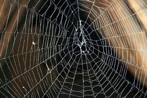 Cuando las arañas toman el poder