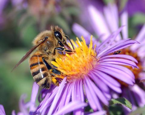 Picar es igual a morir: las abejas