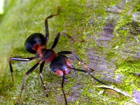 Las hormigas se comportan de manera extraña