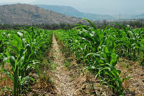A favor de una agricultura sustentable