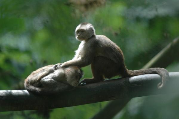 CITES se encarga de proteger a las especies en peligro