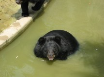 La tragedia del oso luna