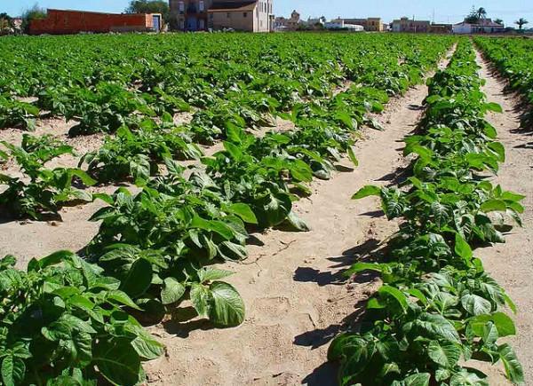 un nuevo sistema pensado para los agricultores