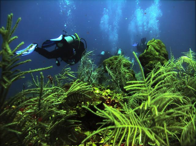 descubrimiento en el fondo del mar