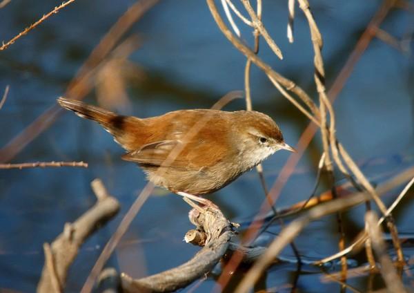 Una investigación pretende conocer si el canto de los pájaros tiene efectos terapéuticos