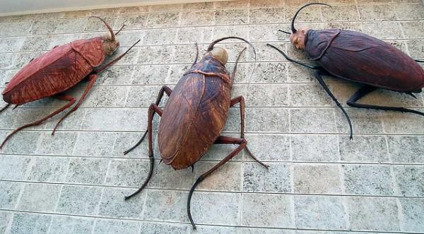 Los feromonas sexuales de las cucarachas