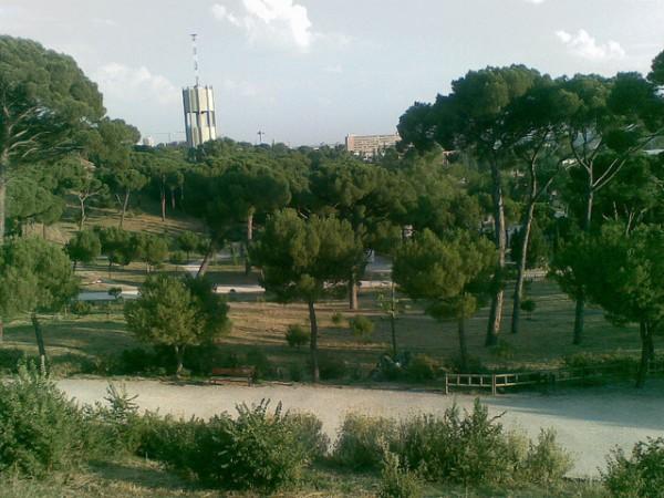 El Montecillo es un pequeño bosque junto al Ciemat, contaminado desde la época franquista