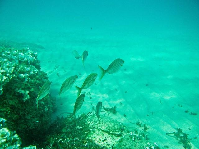 Creciente mortandad de peces