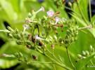 Las plantas y su horario de crecimiento