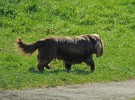 Perros que también se extinguen