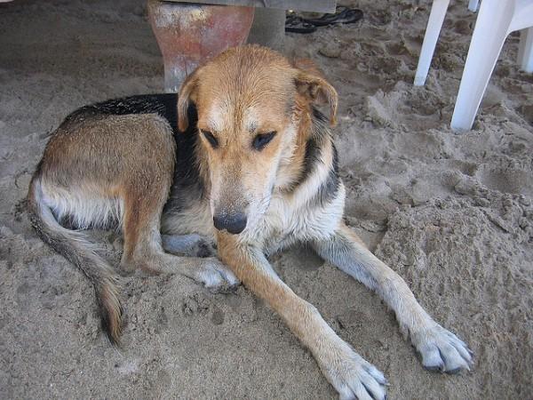 Una vecina de Arbúcies mantiene, en un cercado, a cincuenta perros en un estado deplorable