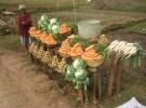 Creación de Cooperativas de Consumo Agroecológico