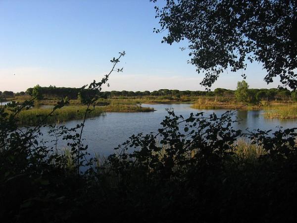 WWF ha presentado un informe, que alerta sobre el robo de agua en Doñana