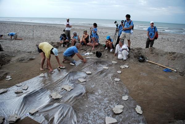 descubrimiento de fosiles