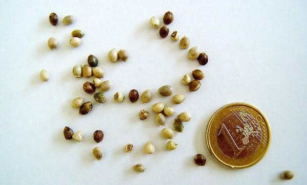 semillas invasores