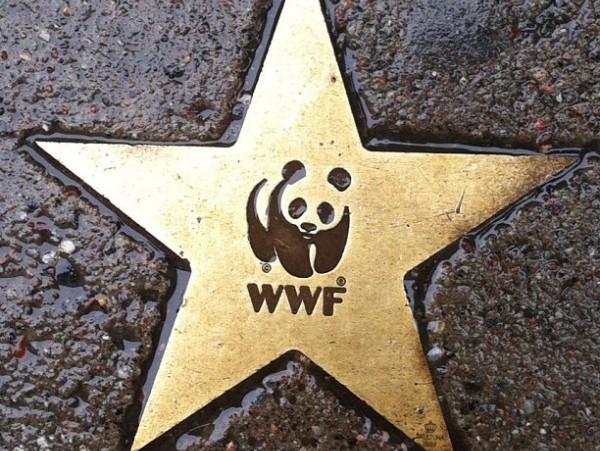 WWF ha acordado eliminar la presidencia de honor, que ostentaba el Rey de España.