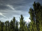 Los bosques de España y el dióxido de carbono