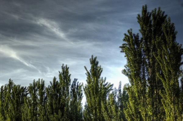 emisiones de dioxido