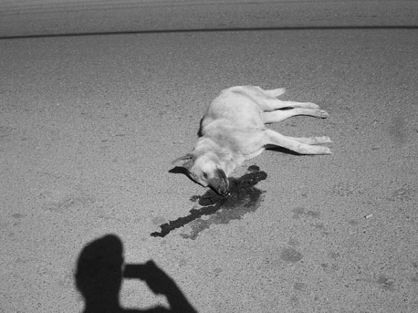 El teniente de alcalde y concejal de Torà ha sido cesado por matar brutalmente a un perro en la calle