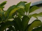 Cómo las plantas escapan a la sombra