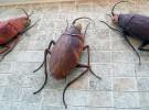 Las amigables cucarachas