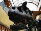 Algunos dinosaurios estaban en peligro antes de la caída del meteorito