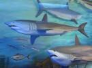 Evitando las mordidas de los tiburones