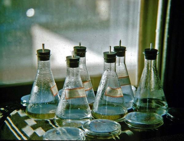 laboratorio con algas
