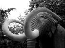 Encontraron nuevos restos de mamut