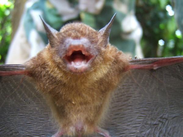 fotografia en primer plano de vampiro