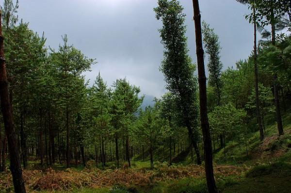 bosque en proceso de reforestacion