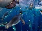 Premios Veolia Environnement Wildlife