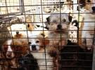 Las protectoras de animales y la crisis