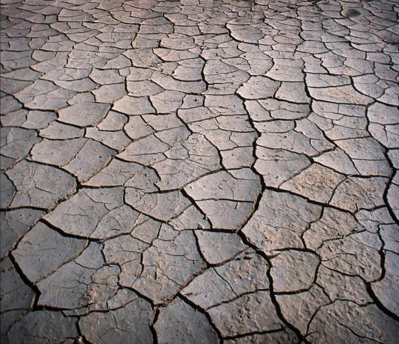 Ecosistema seco