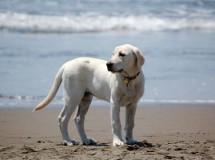 ¿Puedo llevar a mi perro a cualquier playa?