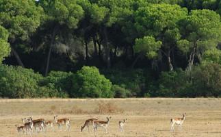 La caza furtiva aumenta en Doñana