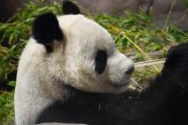 Los 10 animales nacionales más conocidos