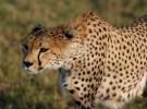 Récords del reino animal, ¡descúbrelos! (II)