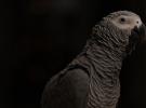 Récords del reino animal, ¡descúbrelos! (III)