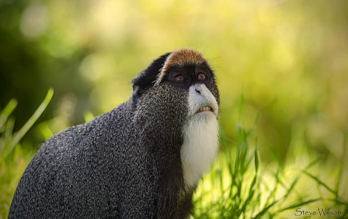 mono-obispo-faunatura