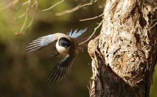 5 consejos para observar aves